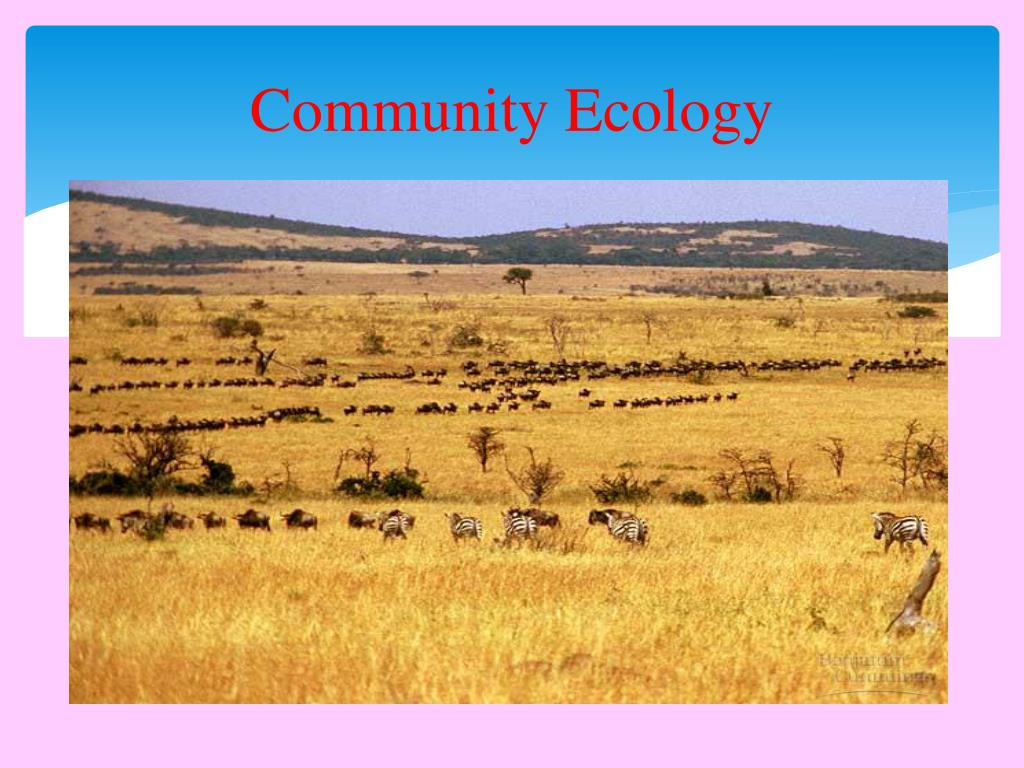 PPT - HUMAN POPULATION Interactions in a Community ...