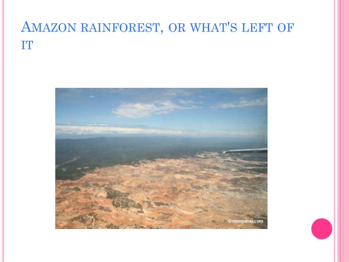 Amazon rainforest, or what's left of it