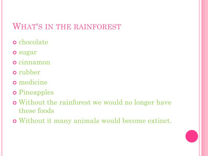 What's in the rainforest