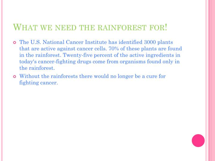 What we need the rainforest for!