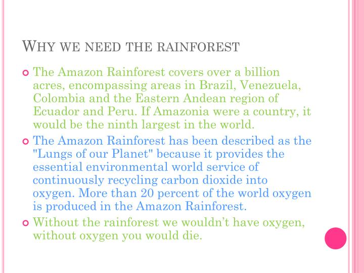 Why we need the rainforest