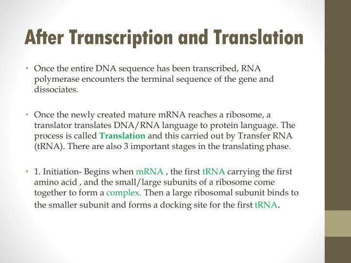 After Transcription and Translation
