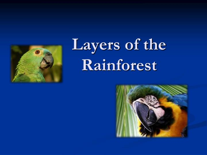 layers of the rainforest n.