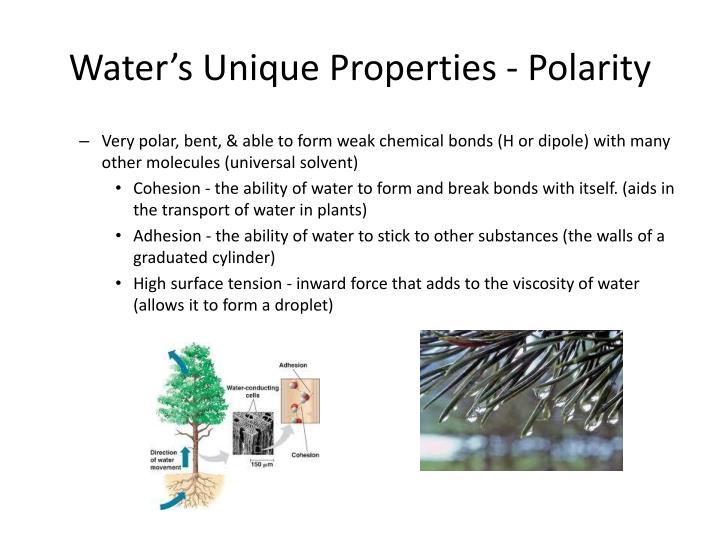 Water s unique properties polarity
