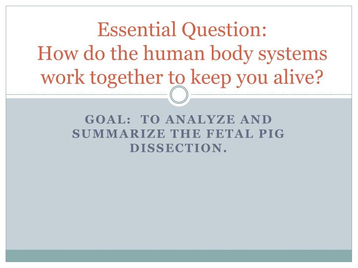 essential question how do the human body systems work together to keep you alive n.