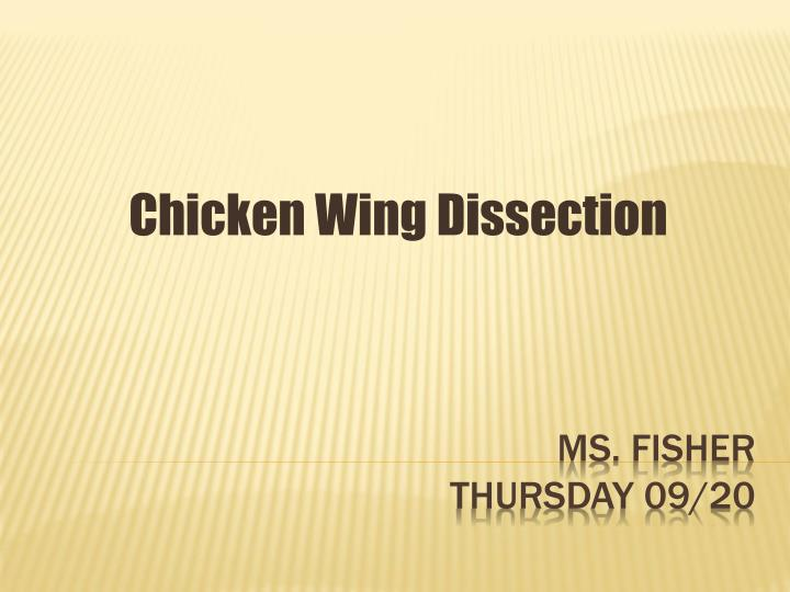 chicken wing dissection n.