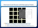hermann grid illusion with receptive fields