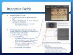 receptive fields