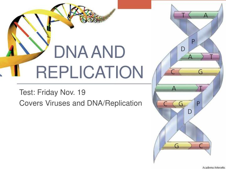 dna and replication n.