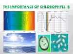 the importance of chlorophyll b