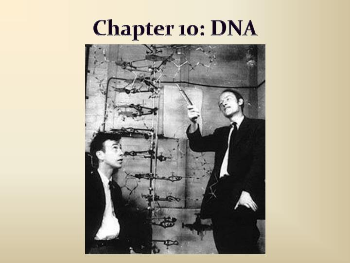 chapter 10 dna n.
