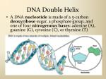 dna double helix2
