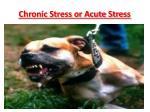 chronic stress or acute stres s