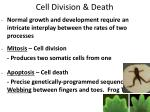 cell division death