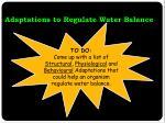adaptations to regulate water balance