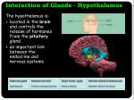 interaction of glands hypothalamus
