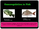 osmoregulation in fish