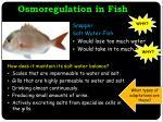 osmoregulation in fish2