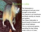 animals in cuba