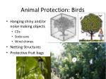 animal protection birds