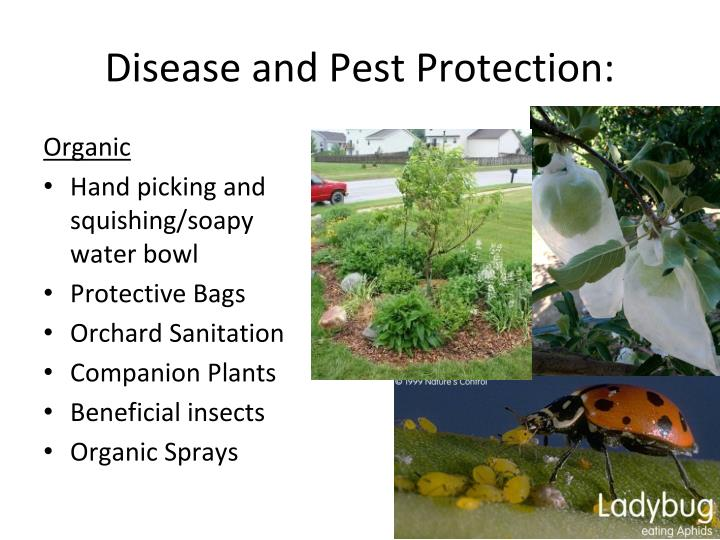 disease and pest protection n.