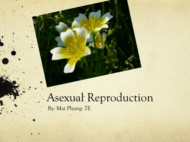 asexual reproduction n.