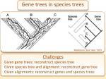 gene trees in species trees