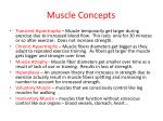 muscle concepts