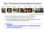 1kp thousand transcriptome project