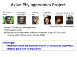 avian phylogenomics project