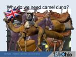 why do we need camel dung