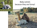 baby camels because they are funny