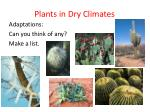 plants in dry climates