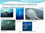 overfishing and bycatch what our oceans should be like