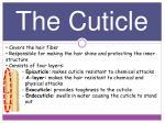the cuticle