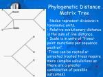 phylogenetic distance matrix tree