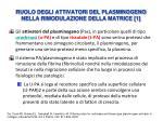 ruolo degli attivatori del plasminogeno nella rimodulazione della matrice 1