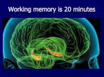 working memory is 20 minutes