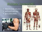 muscular system 600