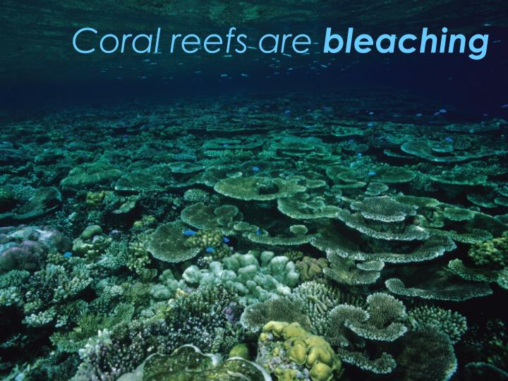 Coral reefs are