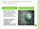 how is an organism s metabolism related to the carbon cycle
