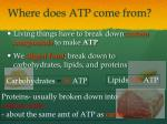 where does atp come from