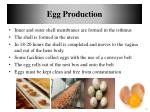 egg production1