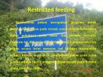 restricted feeding