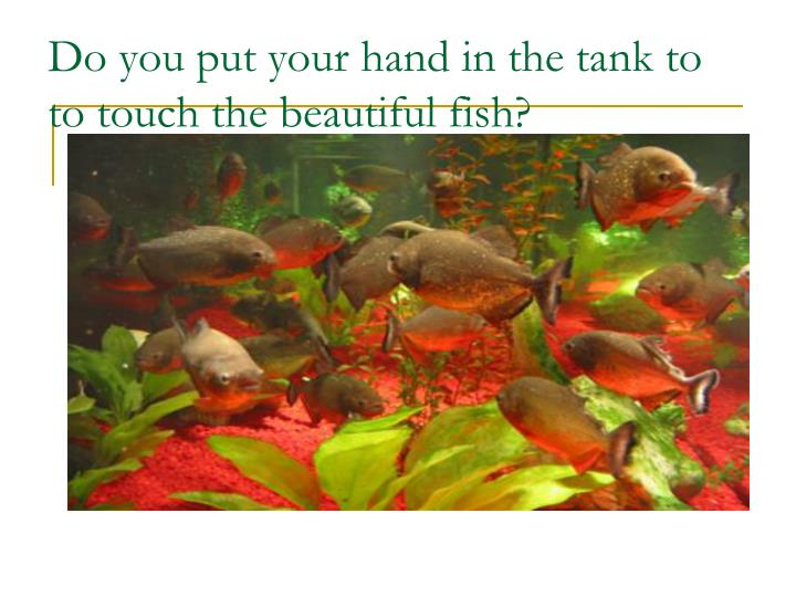 Do you put your hand in the tank to to touch the beautiful fish
