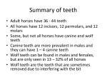 summary of teeth