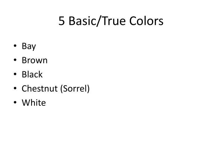 5 basic true colors