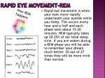rapid eye movement rem