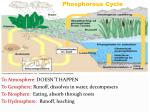 the carbon cycle2