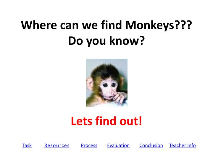where can we find monkeys do you know n.